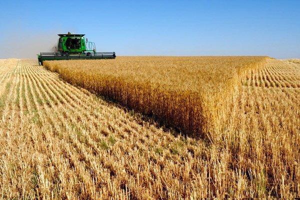 استمرار فراوری گندم لازم است